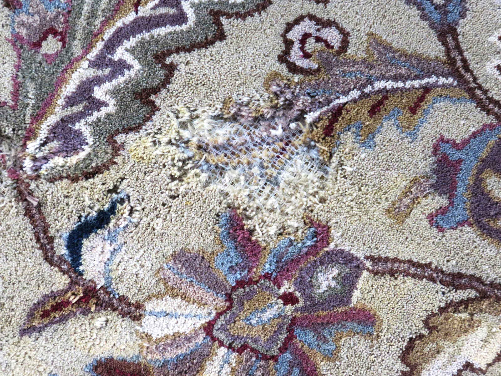 Rug with moth tears