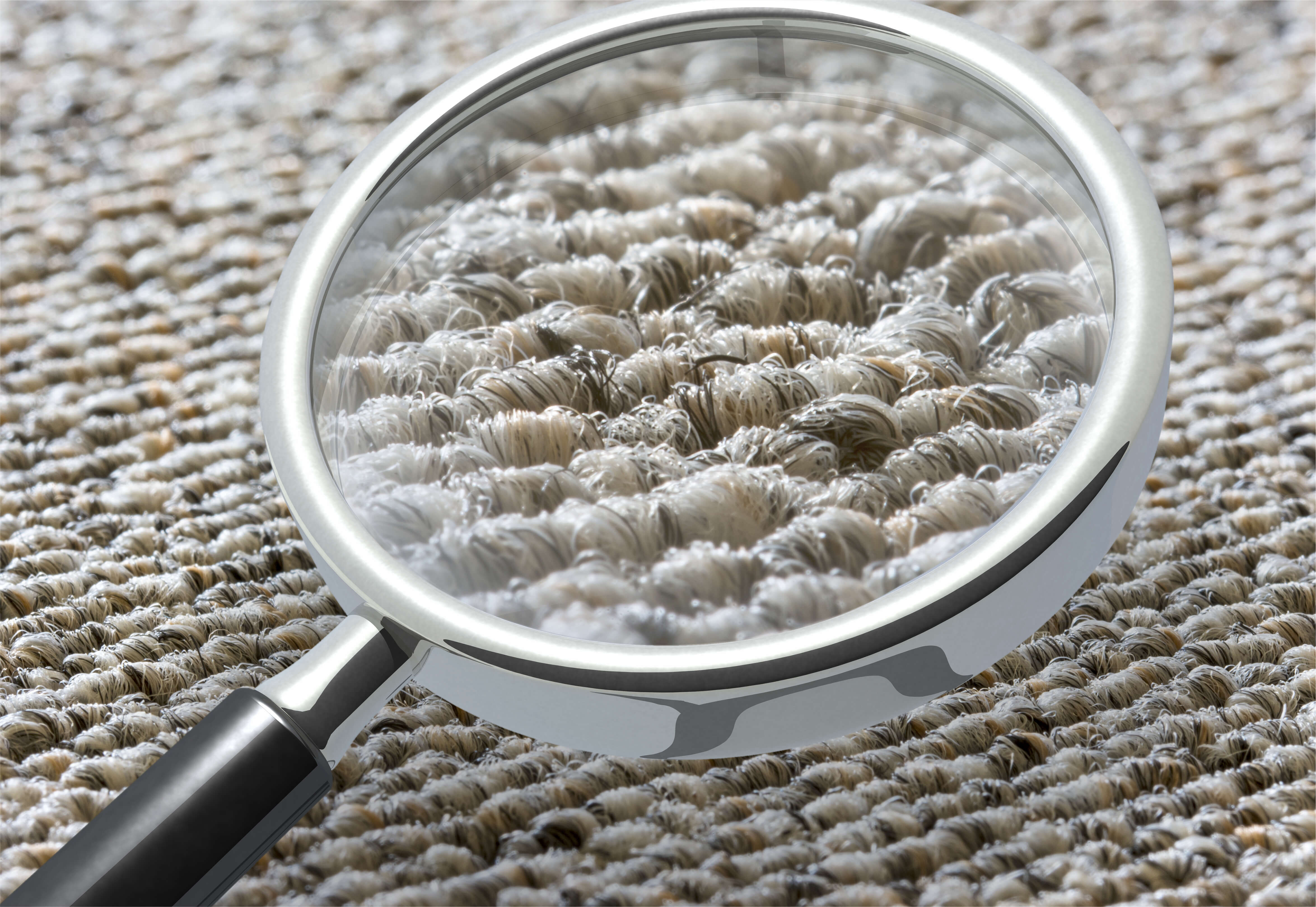Inspecting carpet with magnifying glass