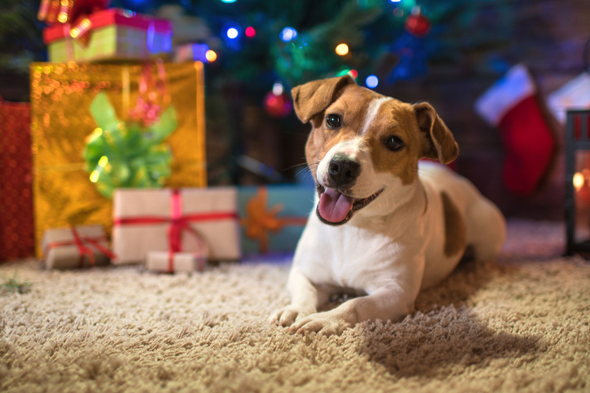 Dog laying under Christmas tree